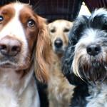 brynn, lexie, molly in the van