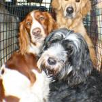 brynn, lexie, molly after a walk