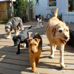 coco, trudy, kodi, jinty walking on the deck