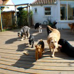 fala, coco, ollie, trudy, kodi, olive, holly run around the deck