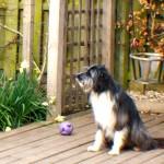 gilbert sitting in the sun