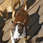 harvey having fun on the deck