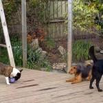 harvey, kodi, ness in the garden