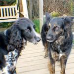 kiera and cody say hello