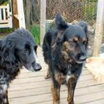 kiera, cody, jinty on the deck