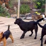 kodi and ness playing chase
