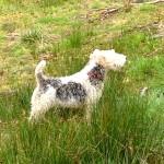 maisie in the grass