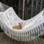 nanook on the hammock