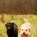 olive and jinty running fast