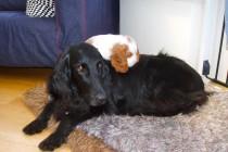 Puppy Love 1