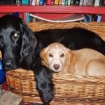cuddles in the basket