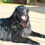 raffi smiles in the sun