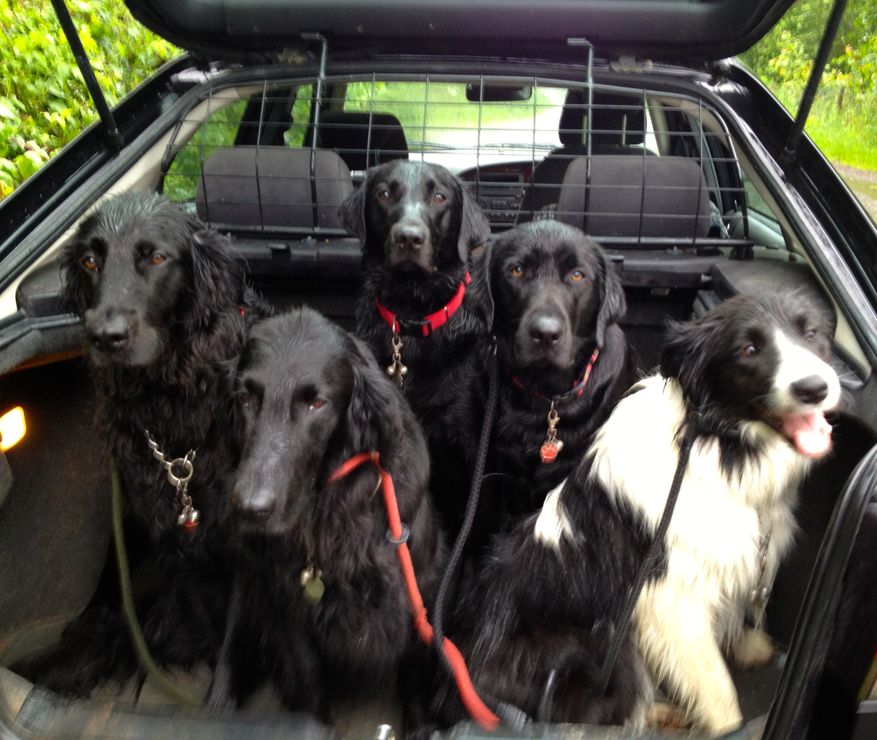 raffi, stella, archie, marley and hamish in the car
