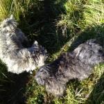 rosie, isla on the grass