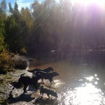rosie, jet, trudy, stella by the river