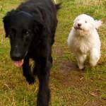 stella and cooper running