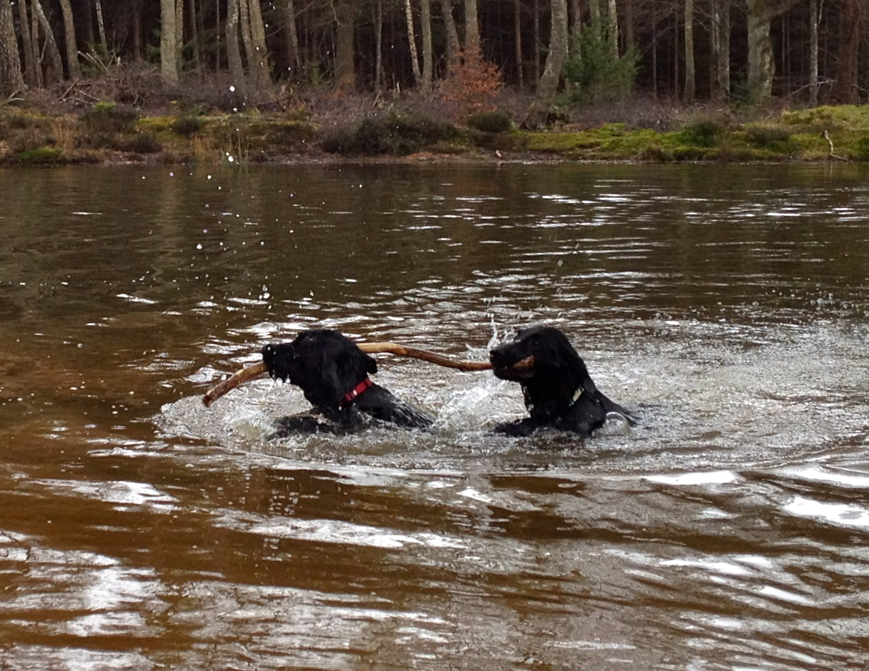 Olive and Stella swimming