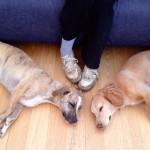 Sleeping doggies