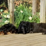 donna and stella have a sleep on the deck