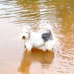 maisie takes a dip