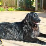 raffi lying in the sun