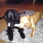 sharing a bone
